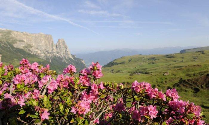 Wanderurlaub in den Dolomiten für Genießer, Geologen und Gratwanderer
